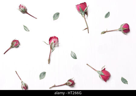 The composition of red flowers pattern of pink roses on a white background.Soft focus.Type flat top - Stock Photo