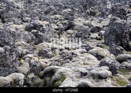 moss covering lava fields, Iceland - Stock Photo