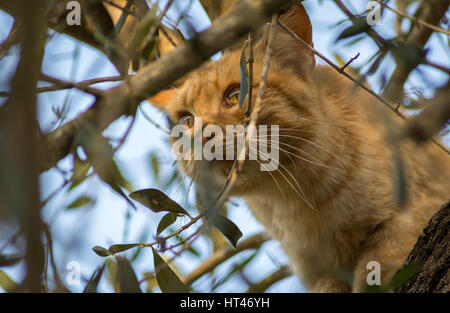 Orange cut on top of a tree hunting. - Stock Photo