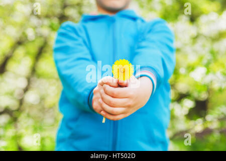 Closeup of small hands holding yellow dandelion flower. Anonymous funny little boy isolated over green blooming - Stock Photo