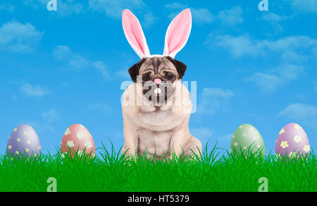 cute pug puppy dog sitting in grass wearing bunny ears diadem, next to colorful pastel easter eggs, blue sky background - Stock Photo