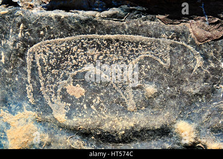 Prehistoric Saharan petroglyph rock art carvings of cattle from a site 20km east of Taouz, South Eastern Morocco - Stock Photo
