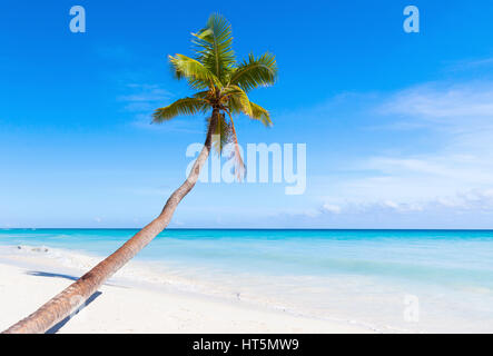 Caribbean Sea, Dominican republic, Saona island. Coconut palm grows on white sandy beach - Stock Photo