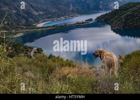 dog in oludeniz view,dog looking to the blue lagoon beach - Stock Photo