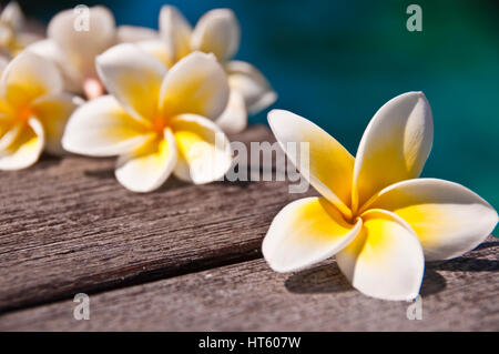 Plumeria flowers on wooden floor, blue water background - Stock Photo