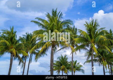 Majestic Hotel Miami Beach Fl