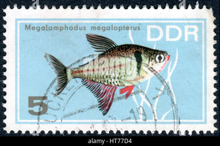 GERMANY - CIRCA 1966: A stamp printed in Germany (GDR), shows tropical fish Black Phantom Tetra (Megalomphodus megalopterus), - Stock Photo