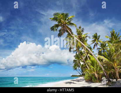 Tropical beach with palm trees and white sand - Stock Photo