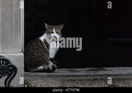 London, UK. 8th Mar, 2017. Larry the cat sits outside number 10 Downing Street Credit: Vickie Flores/Alamy Live - Stock Photo
