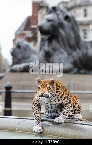 London, UK. 8 March 2017. Nat Geo WILD unveils the world's first hyper realistic animatronic leopard in London's - Stock Photo