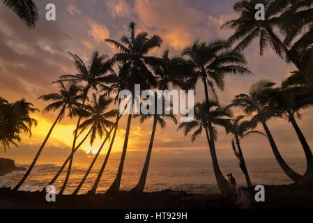 Man photographing coconut palm trees and sunrise at Kama'ili on the Kalapana coast of the Big Island of Hawaii. - Stock Photo