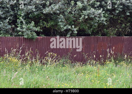 Fence made of panels of rusty corrugated sheet metal with grass in front and trees behind it. - Stock Photo