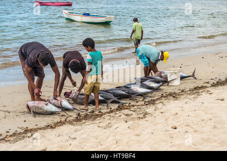 Tamarin, Mauritius - December 10, 2015: Fishermen cleaning freshly big tuna fish on the beach of Tamarin Bay in - Stock Photo