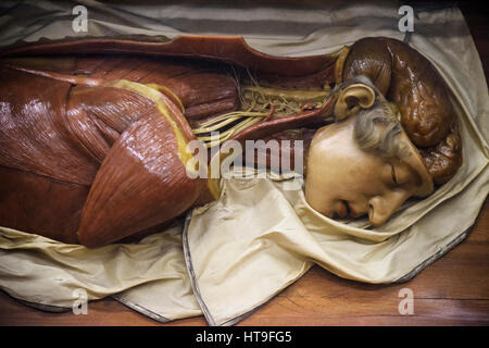 Florence. Italy. Collection of 18th century wax anatomical models at La Specola, Museum of Zoology and Natural History. - Stock Photo