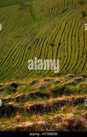 Westbury Hill on Bratton Down, Wiltshire, England, UK - Stock Photo