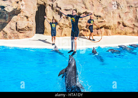 Dolphin show in the Loro Parque (Loro Parque), pushed out of the water dolphin tamer, 13.09.2016, (Tenerife, Spain).