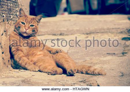 Sunbathing & relaxed, Lazy domestic cat, lying on the street pavement, sleepy cute animal, Animal humour  funny - Stock Photo