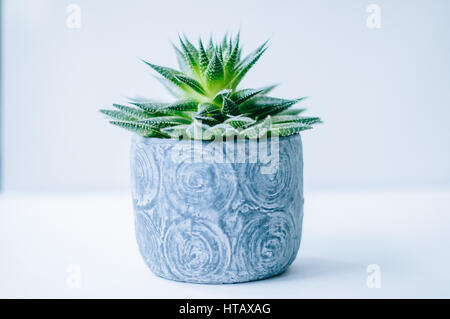 Green Succulents in Gray Container With White Background