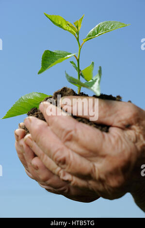 Old hands holding a green young plant. Symbol of spring and ecology concept - Stock Photo