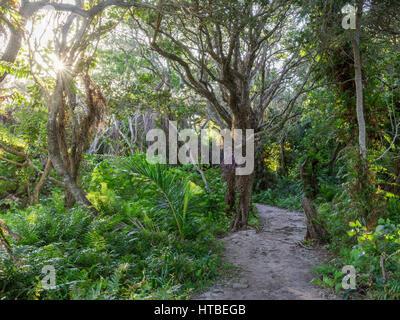 Path through jungle near lake Kuhiange, Kosi Bay Nature Reserve, iSimangaliso Wetland Park, KwaZulu-Natal, South - Stock Photo