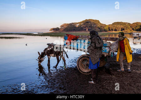 Early Morning On The Shore Of Lake Awassa, A Donkey Drinks From The Lake, Lake Awassa, Ethiopia - Stock Photo