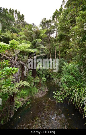 Shallow creek flowing through dense green New Zealand bush. - Stock Photo