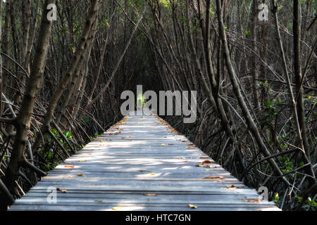 Tree tunnel, Wooden Bridge In Mangrove Forest at Laem Phak Bia, Phetchaburi, Thailand - Stock Photo