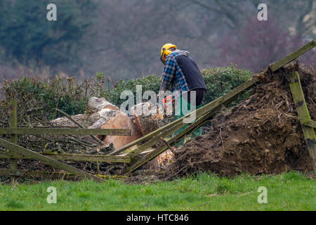 Tree surgeon using a chainsaw to remove a fallen tree following gales in storms, West Yorkshire, England, UK - Stock Photo