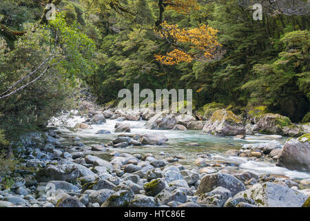 Hollyford Valley, Fiordland National Park, Southland, New Zealand. The Hollyford River flowing through native beech - Stock Photo