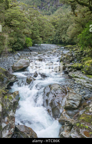 Milford Sound, Fiordland National Park, Southland, New Zealand. The Cleddau River flowing through native beech forest - Stock Photo