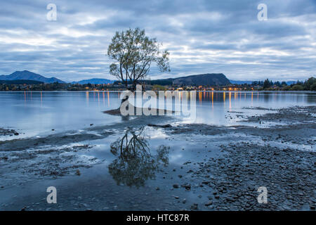 Wanaka, Otago, New Zealand. View across Roys Bay at dawn, iconic willow tree reflected in still water on the shore - Stock Photo