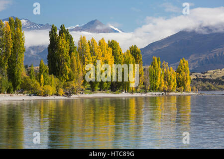 Wanaka, Otago, New Zealand. View across Roys Bay, autumn, golden poplars reflected in the tranquil waters of Lake - Stock Photo