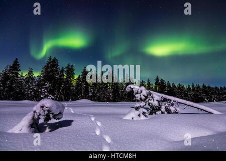 Fox tracks under the aurora - Stock Photo