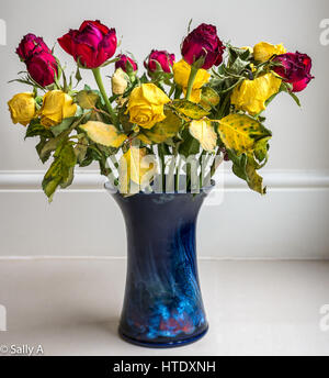 Faded dying dried up rose flowers arranged in blue ceramic vase against a plain background - Stock Photo