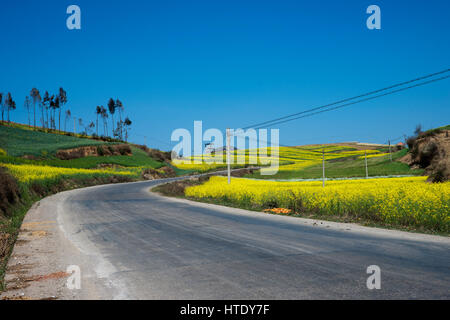 Grey asphalt road running through a yellow flower field in the afternoon and nobody around, China. - Stock Photo