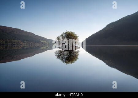 Solitary Tree On Island reflected in a still Lake Vyrnwy, Wales, United Kingdom - Stock Photo