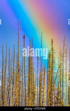Rainbow in Medicine Lake area, Jasper National Park - Stock Photo