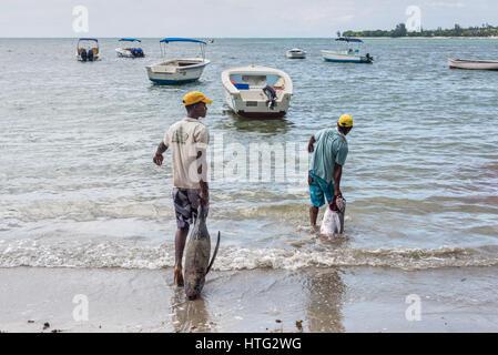 Tamarin, Mauritius - December 10, 2015: Fishermen pulling large tuna fish at sea for washing on the Tamarin beach - Stock Photo