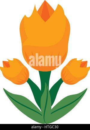 tulip flower spring image