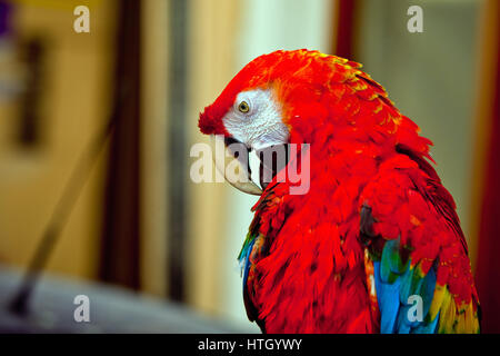 Red and Green Macaw | Beautiful Parrots of the world | Pinterest ...