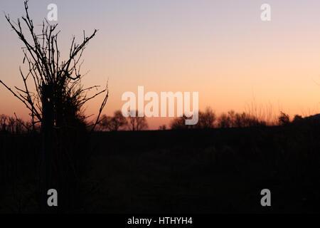 Weinberg im Sonnenuntergang - Stock Photo