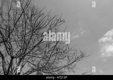 A part of tree in black and white tone  with cloudy sky background. - Stock Photo