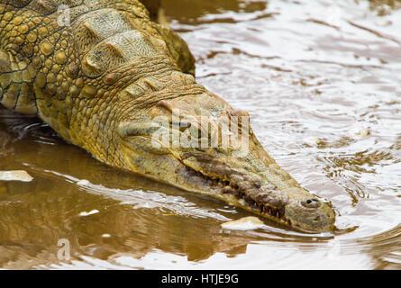 Crocodile in Tsavo East National Park. Kenya. - Stock Photo