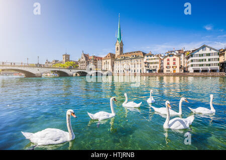 Beautiful view of the historic city center of Zurich with famous Fraumunster Church and swans on river Limmat on - Stock Photo
