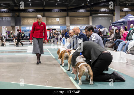 Seattle, Washington DC, USA. 11th March 2017. Judge Jan Brutton in the ring judging English Bulldogs at the 2017 - Stock Photo