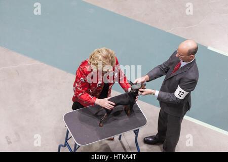 Seattle, Washington DC, USA. 11th March 2017. Judge Karen McFarlane examines a Miniature Pinscher at the 2017 Seattle - Stock Photo
