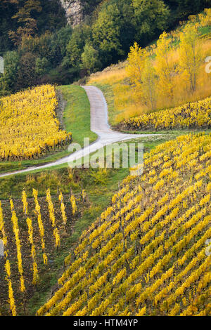 Autumnal colours in the vineyards around Château-Chalon, Jura, Franche-Comté, France - Stock Photo