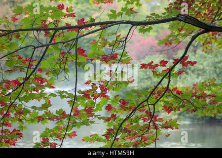 Autumn colours, Oxtongue Rapids, Muskoka, Ontario, Canada - Stock Photo
