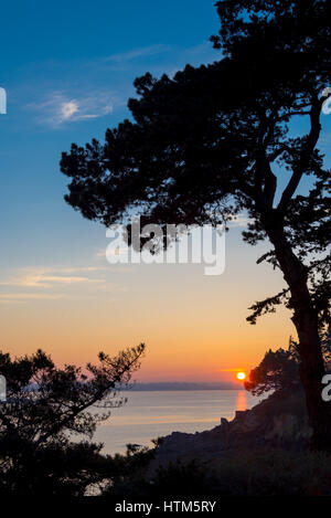 Silhouette of a pine tree in the sunset, channel sea in the background, Brittany near St malo, France - Stock Photo