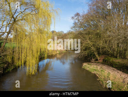 Scenic view of the River Otter in Spring showing the early green leaves of a Weeping Willow tree hanging over the - Stock Photo